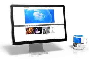Custom Website Design - Contact Just Ducky Designs